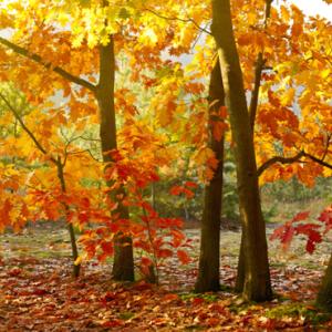 Insistent light in autumn.