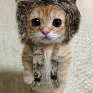 PRECIOUS - A Kitten in a Hat